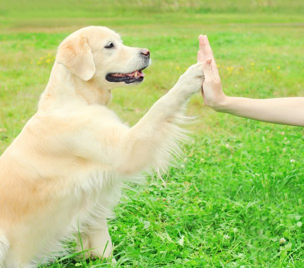 Dog trained to give a high-five
