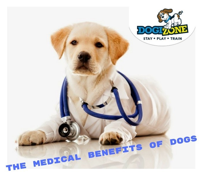 medical benefits of dogs