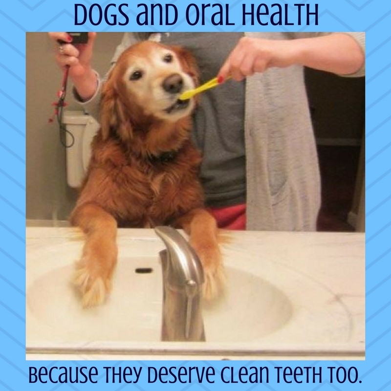 Animal Dental Care