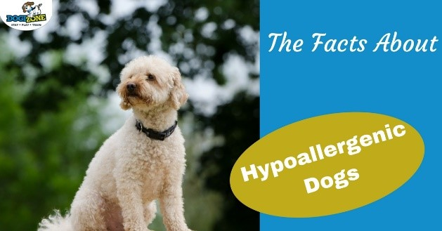 the facts about hypoallergenic dogs