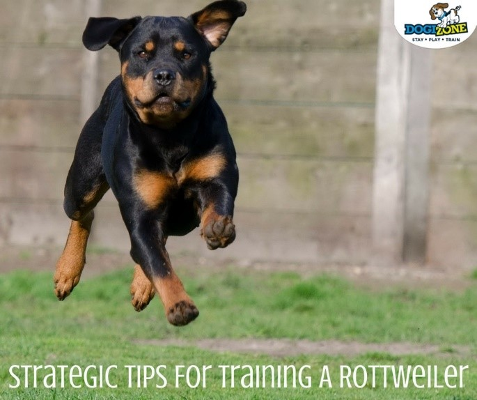 Strategic Tips For Training A Rottweiler Dogizone