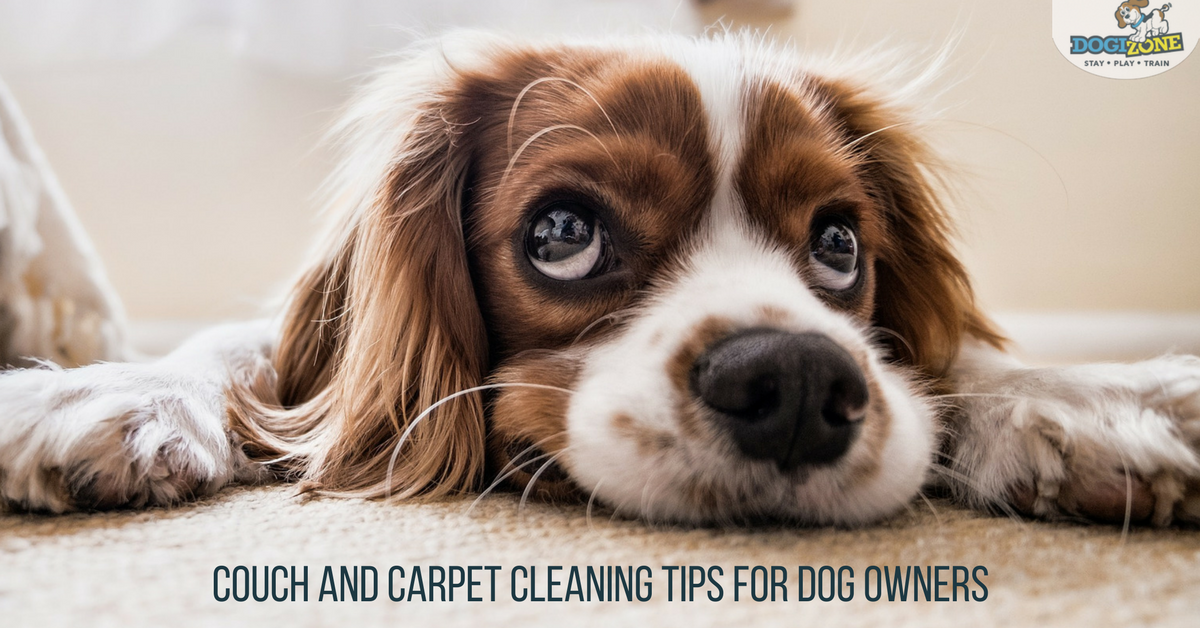 Carpet Cleaning Tips For Dog Owners