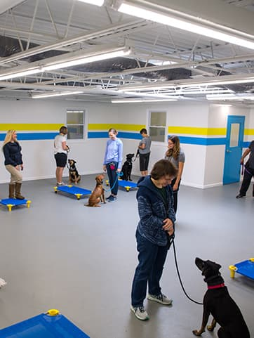 Dogs and their pet parents in training class
