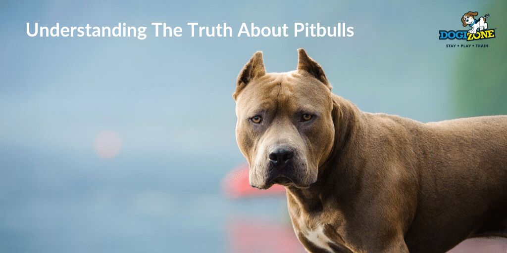 Understanding The Truth About Pitbulls Dogizone