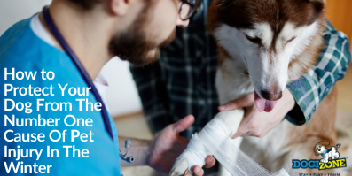 How to Protect Your Dog From The Number One Cause Of Pet Injury In The Winter