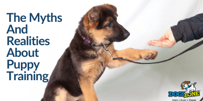 The Myths And Realities About Puppy Training