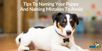 Tips To Naming Your Puppy And Naming Mistakes To Avoid