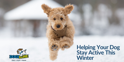 Helping Your Dog Stay Active This Winter