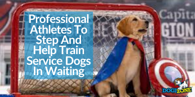 Professional Athletes To Step And Help Train Service Dogs In Waiting