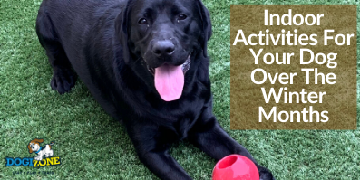 Indoor Activities For Your Dog Over The Winter Months