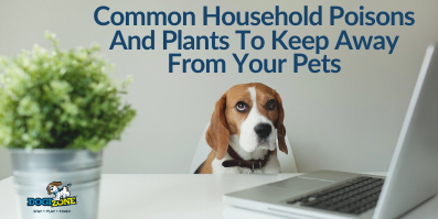Common Household Poisons And Plants To Keep Away From Your Pets