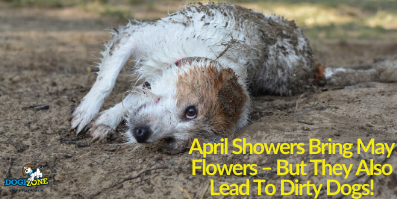April Showers Bring May Flowers – But They Also Lead To Dirty Dogs!