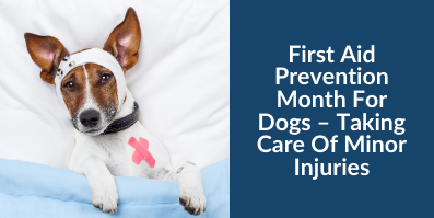 First Aid Prevention Month For Dogs – Taking Care Of Minor Injuries
