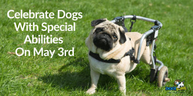Celebrate Dogs With Special Abilities On May 3rd