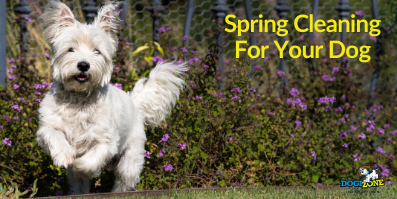Spring Cleaning For Your Dog