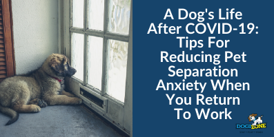 Tips For Reducing Pet Separation Anxiety When You Return To Work