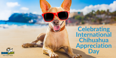 Larga Vida Al Perro: Celebrating International Chihuahua Appreciation Day