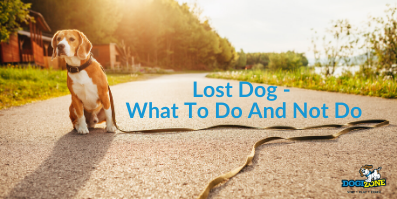 Lost Dog - What To Do And Not Do