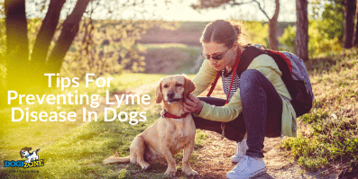 Tips For Preventing Lyme Disease In Dogs