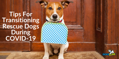 Tips For Transitioning Rescue Dogs During COVID-19