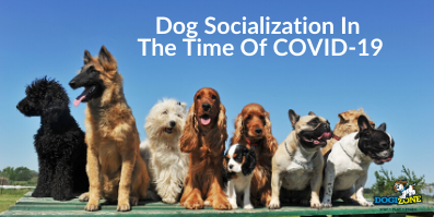 Dog Socialization In The Time Of COVID-19