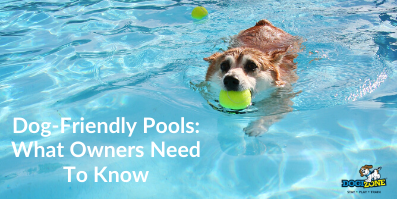 Dog-Friendly Pools: What Owners Need To Know