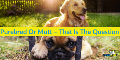 Purebred Or Mutt – That Is The Question