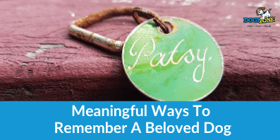 Meaningful Ways To Remember A Beloved Dog