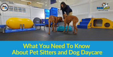 What You Need To Know About Pet Sitters and Dog DayCare
