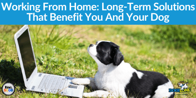 Working From Home: Long-Term Solutions That Benefit You And Your Dog