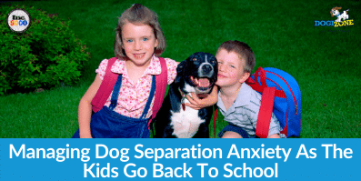 Managing Dog Separation Anxiety As The Kids Go Back To School