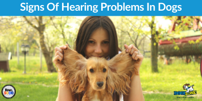 Signs Of Hearing Problems In Dogs