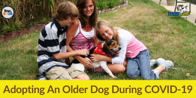 Adopting An Older Dog During COVID-19