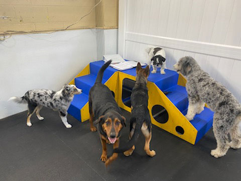 Group of dogs on playground equipment