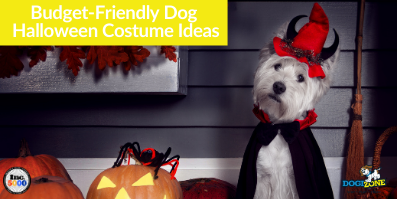 Budget-Friendly Dog Halloween Costume Ideas