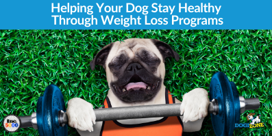 Helping Your Dog Stay Healthy Through Weight Loss Programs