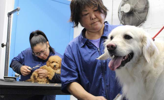 Two dogs being groomed