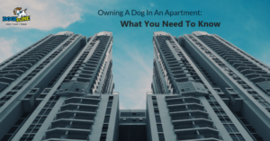 owning a dog in an apartment: what you need to know