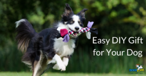 holiday DIY gift ideas for your dog