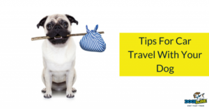 tips for car travel with your dog