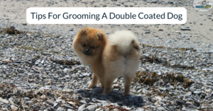 tips for grooming a double coated dog