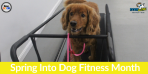 spring into dog fitness month