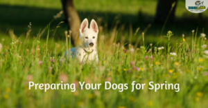 preparing your dogs for spring