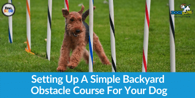 Setting Up A Simple Backyard Obstacle Course For Your Dog