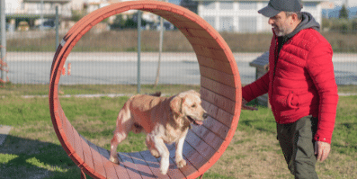 Dog Tunnels - Setting Up A Simple Backyard Obstacle Course For Dog