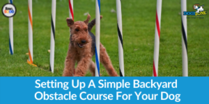 Setting Up A Simple Backyard Obstacle Course For Dog