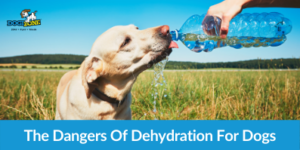 The Dangers Of Dehydration For Dogs