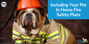 Including Your Pet In Home Fire Safety Plans