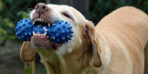 Spoil Your Dog Day with a new toy