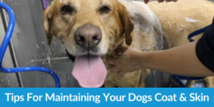 Tips For Maintaining Your Dogs Coat And Skin